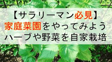 【サラリーマンでもできる】ハーブや野菜を家庭菜園で自家栽培!