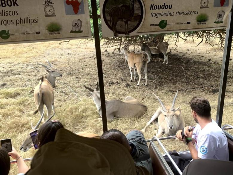 動物園のバス観光